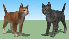 Pets / Animals / Wildlife
