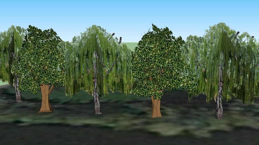 Bäume an der Saaleaue - Jena