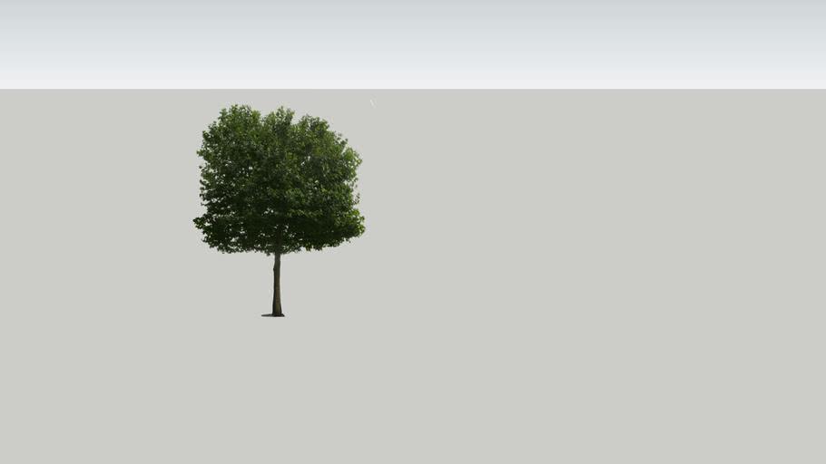 Photorealistic Tree