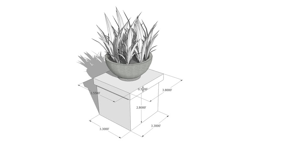 Sanseveria in a pott