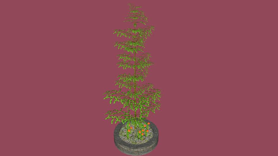 Bambú con Tulipanes