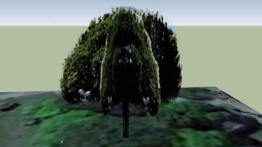 Árvore Amambaí