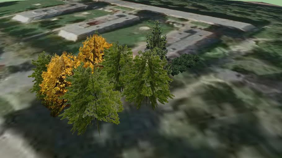 Trinec - trees - 37