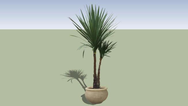 2D indoor plants