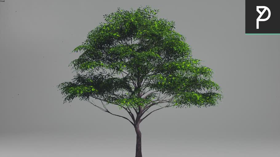 2DTrees_053 | Leaf Medium
