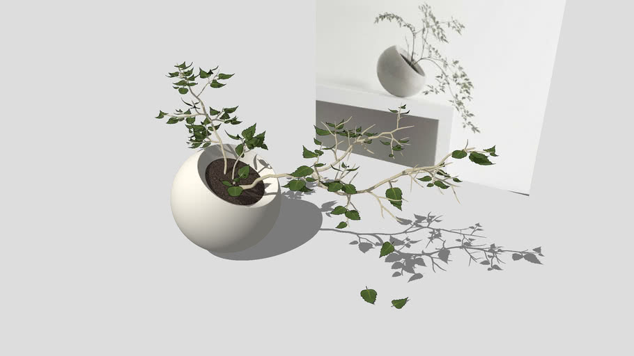 Indoor plant + Vase Комнатное растение + Ваза