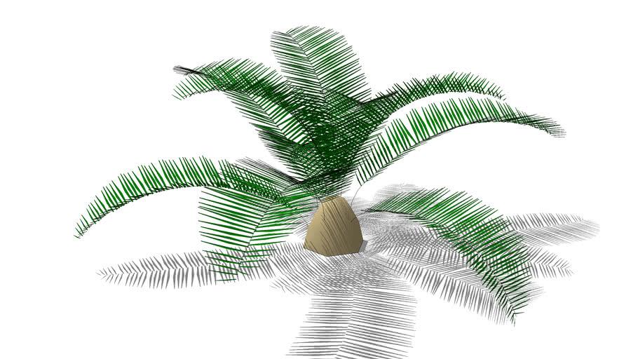 Plant_SagoPalm