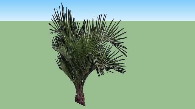 2D Small Palm Tree - Rotating