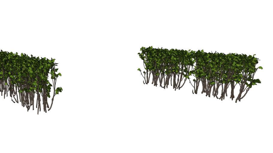 cây 2