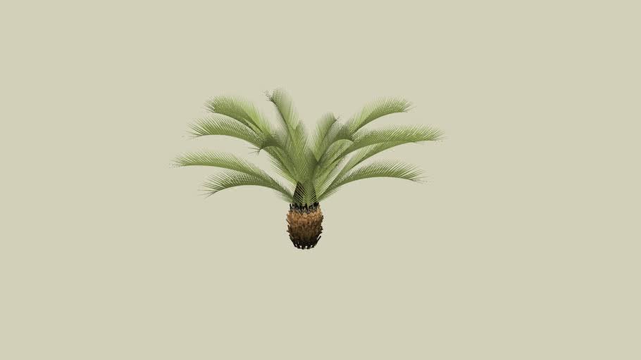 Arbusto XI