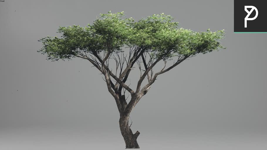 2DTrees_002 | Leaf Medium