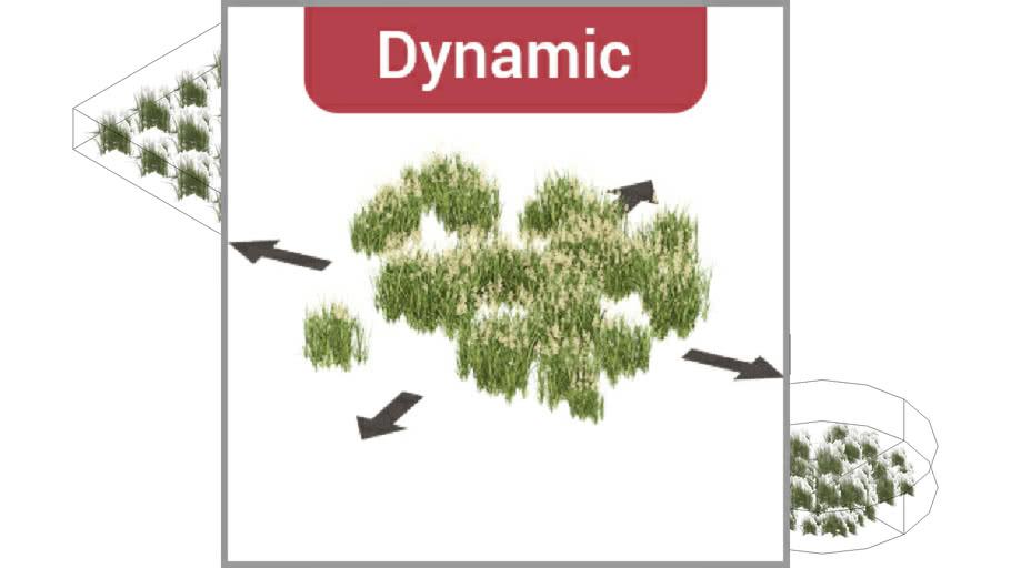 ROCKIT3D   Deschampsia cespitosa 0.55 m (Tufted hairgrass) dynamic